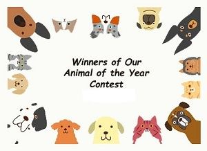 dog & cat winners